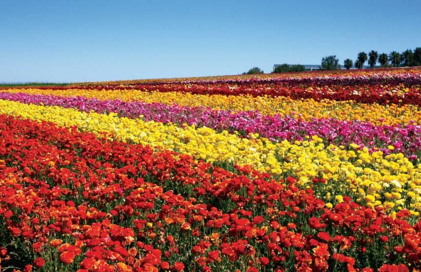 flower.fields.bg_